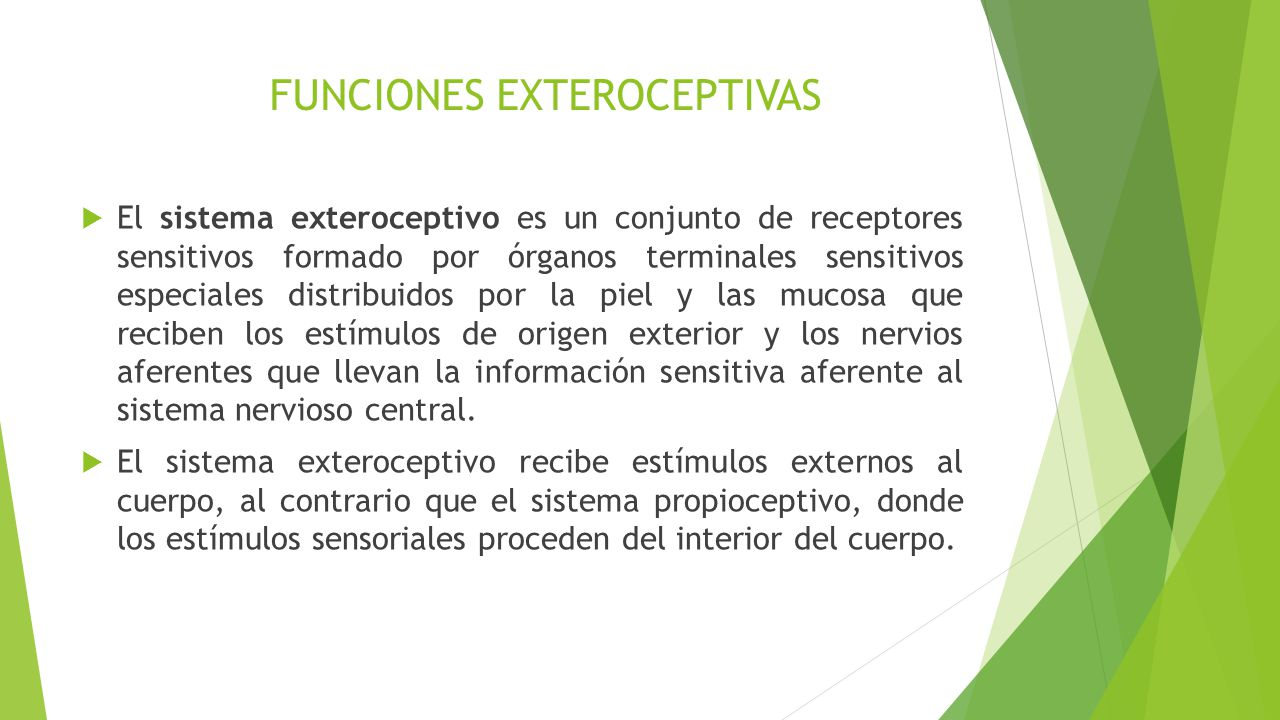 Funciones perceptivo motrices ppt descargar for Significado de exterior
