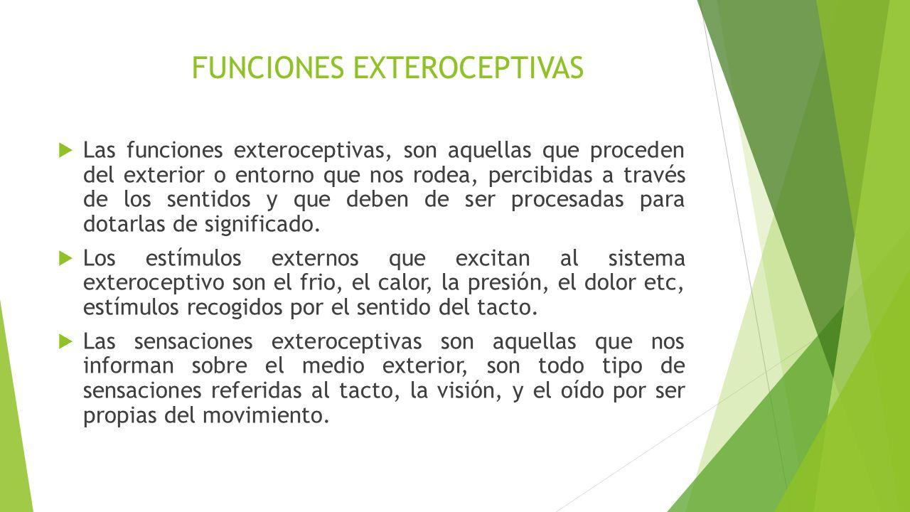 Funciones perceptivo motrices ppt descargar for Significado exterior