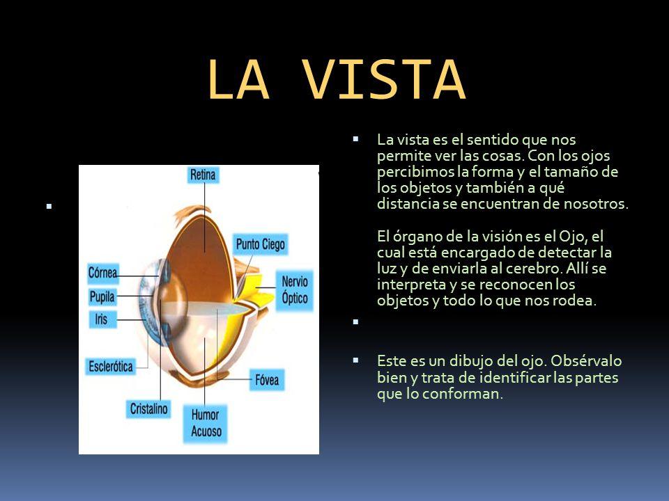 LOS CINCO SENTIDOS DEL CUERPO HUMANO - ppt video online descargar