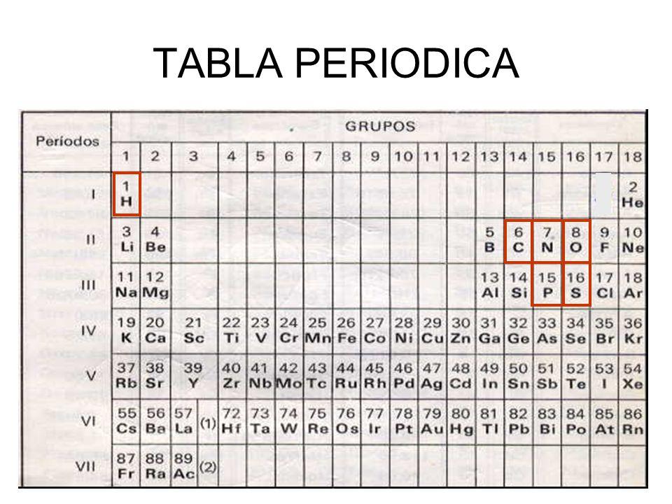 Biologa 3 diversificacin ppt video online descargar 3 tabla periodica urtaz Gallery