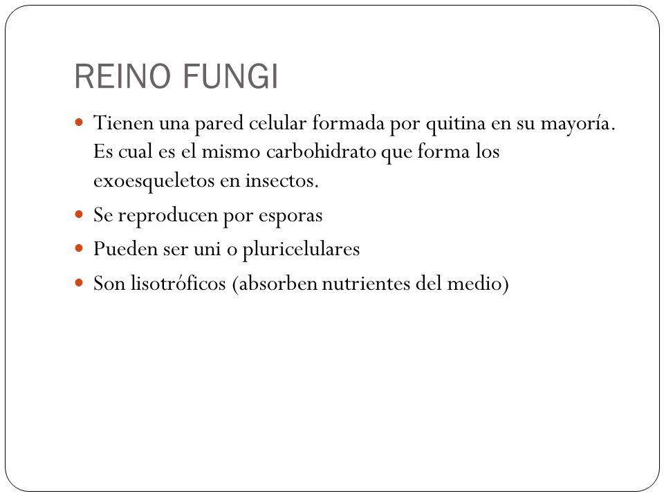 REINO FUNGI Tienen una pared celular formada por quitina en su mayoría. Es cual es el mismo carbohidrato que forma los exoesqueletos en insectos.