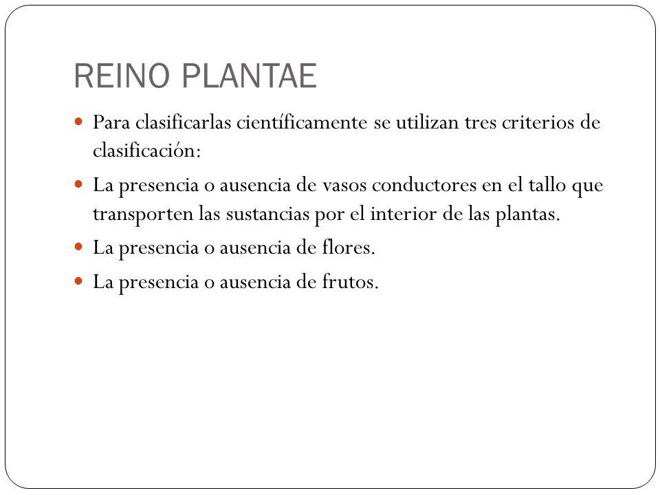 REINO PLANTAE Para clasificarlas científicamente se utilizan tres criterios de clasificación: