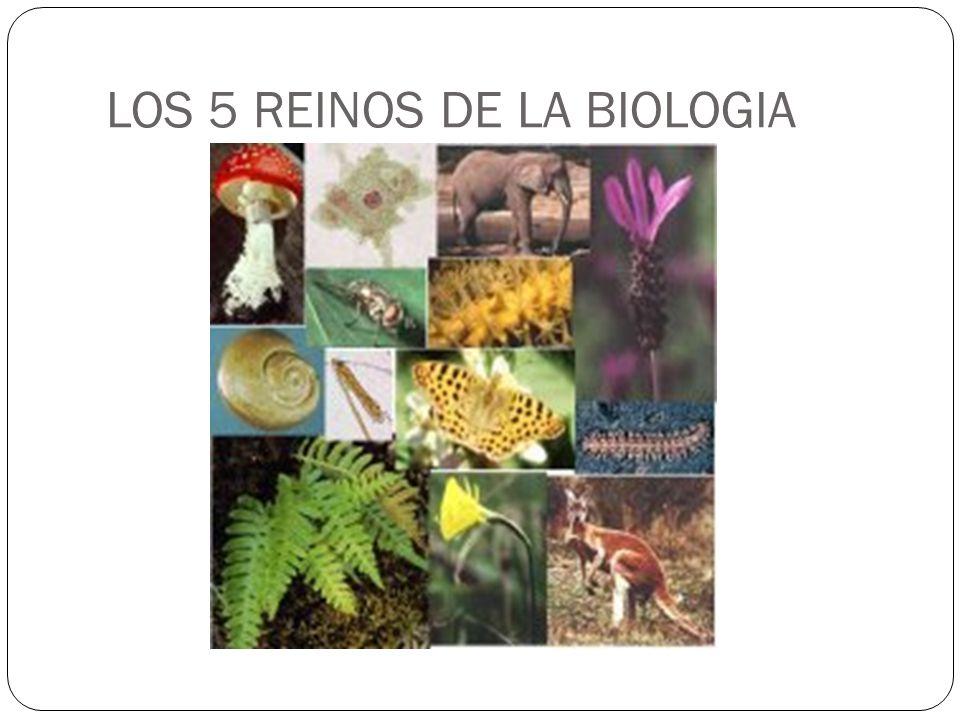 LOS 5 REINOS DE LA BIOLOGIA