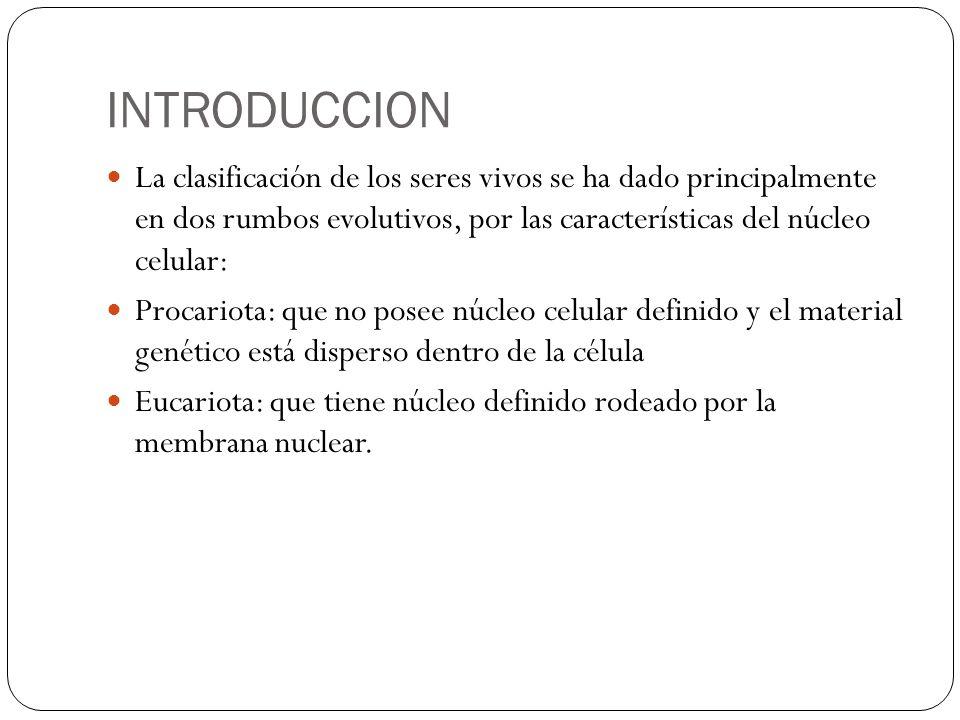 INTRODUCCION La clasificación de los seres vivos se ha dado principalmente en dos rumbos evolutivos, por las características del núcleo celular: