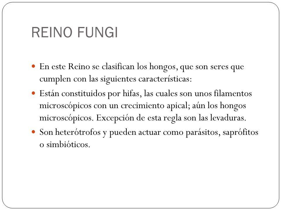 REINO FUNGI En este Reino se clasifican los hongos, que son seres que cumplen con las siguientes características: