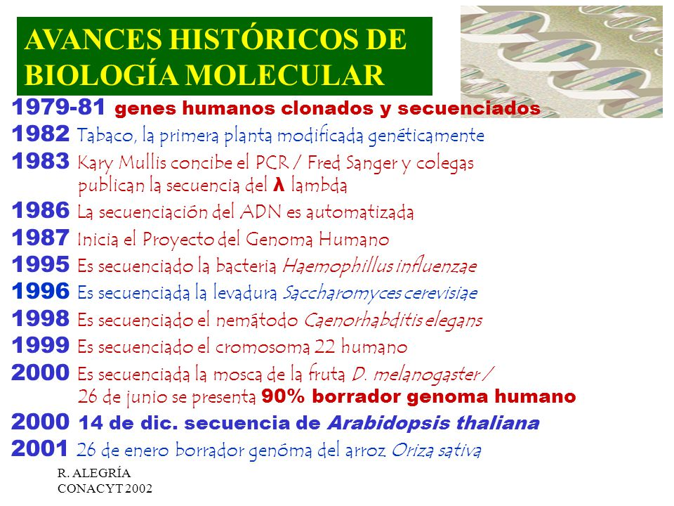 Gen ma gen y adn recombinante ppt video online descargar for En 2003 se completo la secuenciacion del humano