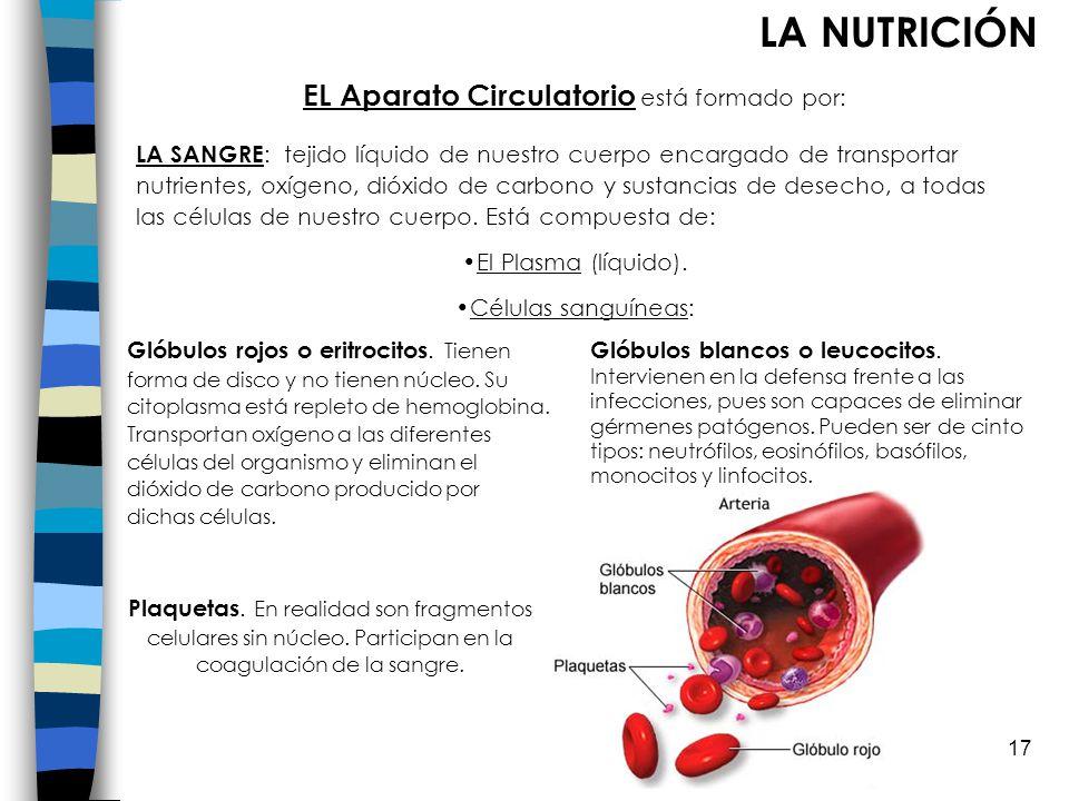EL Aparato Circulatorio está formado por: