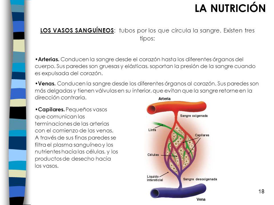 LA NUTRICIÓN LOS VASOS SANGUÍNEOS: tubos por los que circula la sangre. Existen tres tipos: