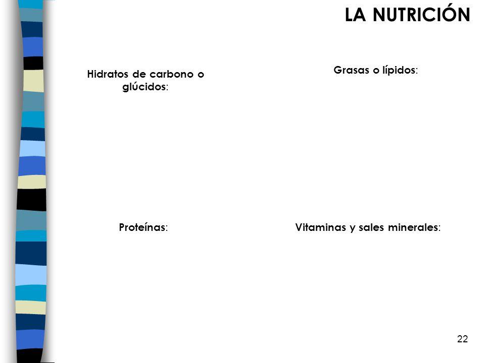 LA NUTRICIÓN Grasas o lípidos: Hidratos de carbono o glúcidos: