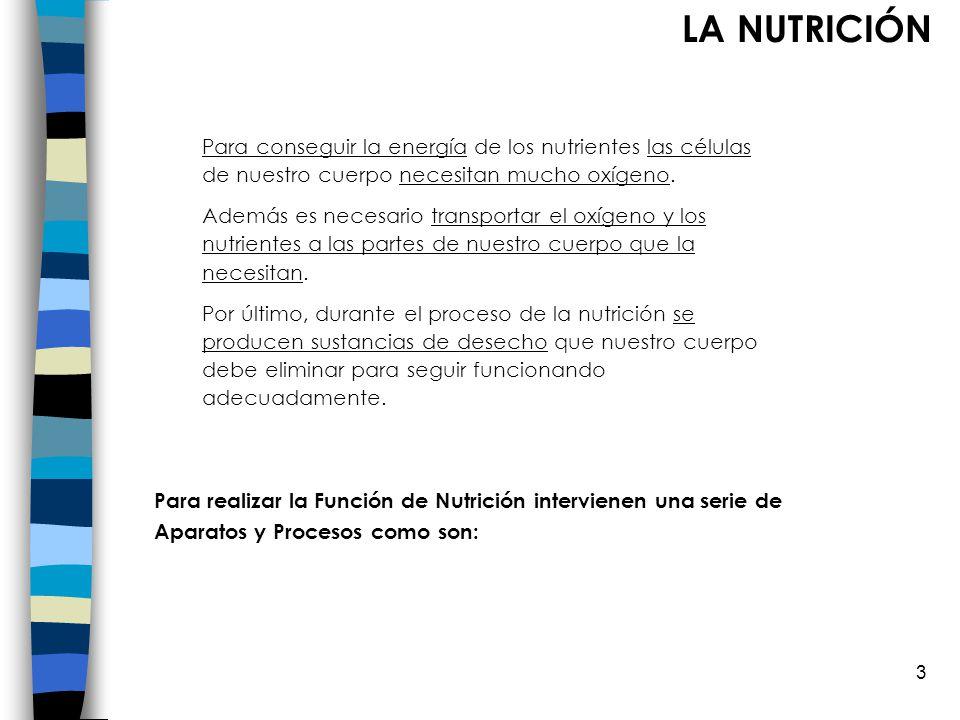 LA NUTRICIÓN Para conseguir la energía de los nutrientes las células de nuestro cuerpo necesitan mucho oxígeno.