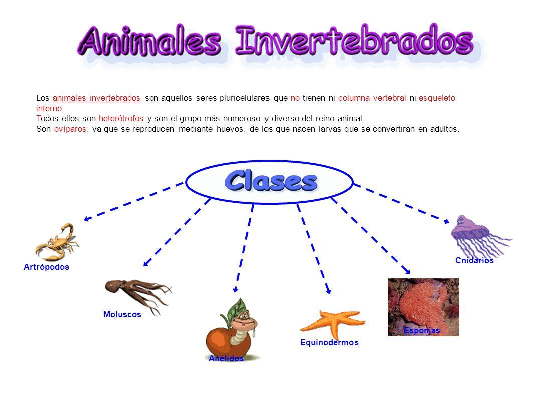 Los animales invertebrados son aquellos seres pluricelulares que no ...