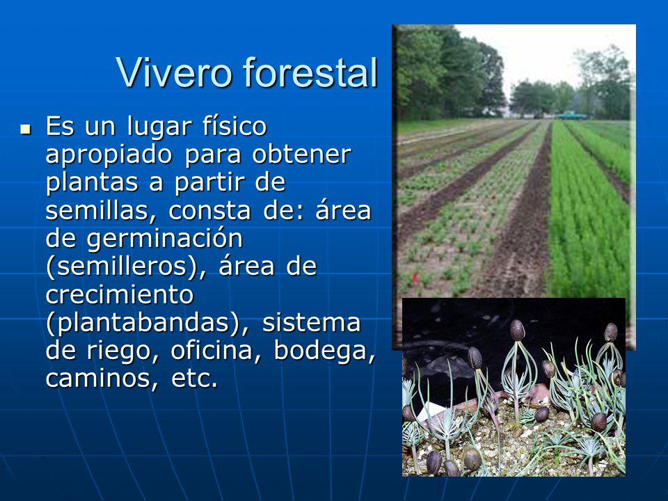 Silvicultura i conceptos b sicos ppt video online descargar for Vivero online arboles