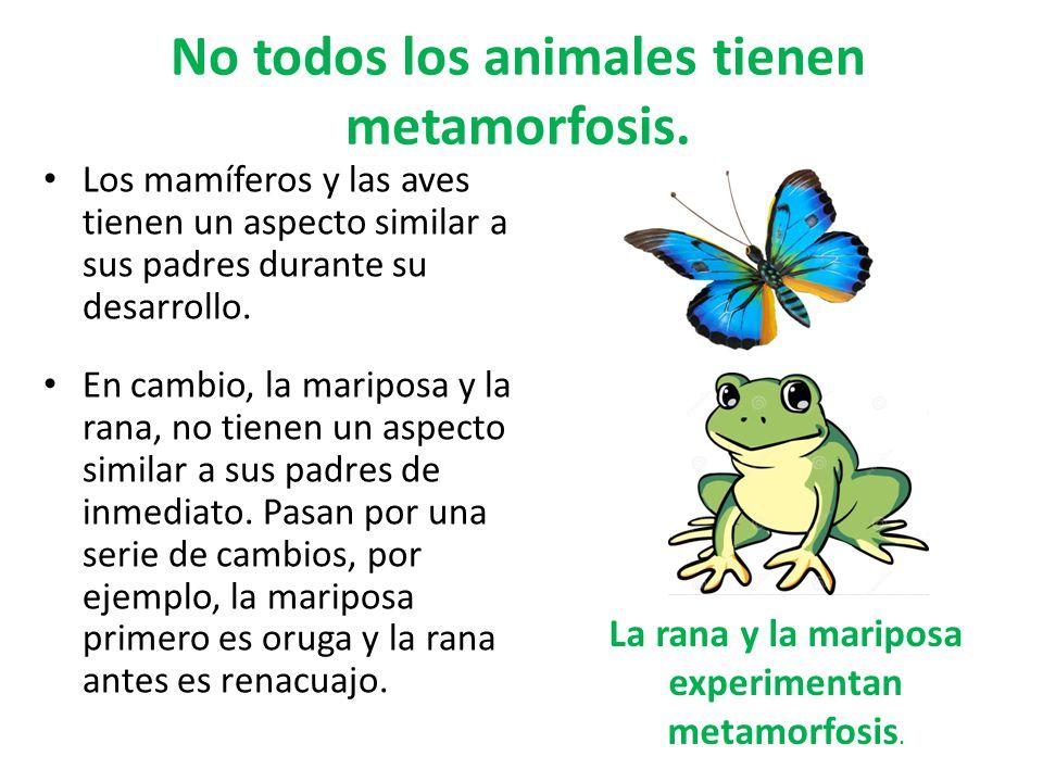 No todos los animales tienen metamorfosis.