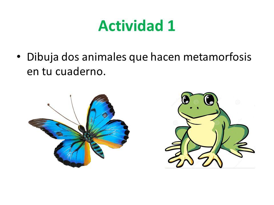 Actividad 1 Dibuja dos animales que hacen metamorfosis en tu cuaderno.