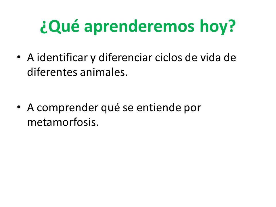 ¿Qué aprenderemos hoy. A identificar y diferenciar ciclos de vida de diferentes animales.