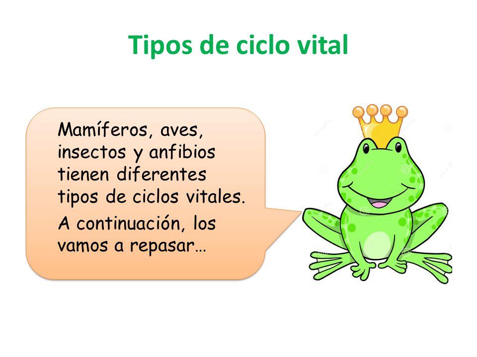 Tipos de ciclo vital Mamíferos, aves, insectos y anfibios tienen diferentes tipos de ciclos vitales.
