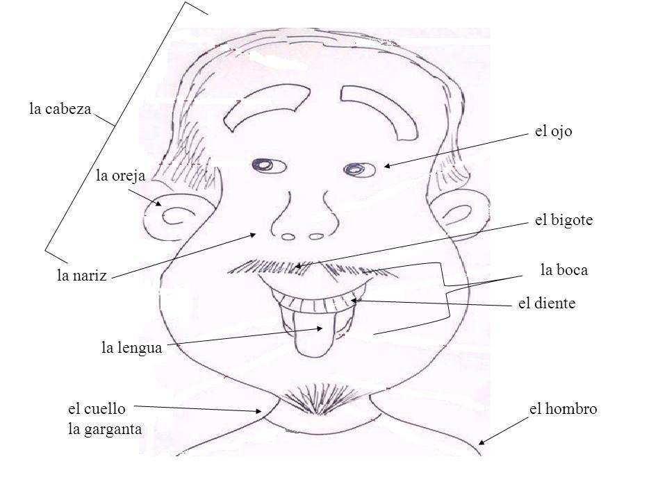 Atractivo Cuello Y La Garganta Anatomía Bosquejo - Anatomía de Las ...