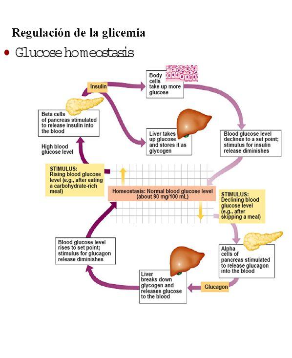 Concepto de Hormona y Control Hormonal - ppt video online