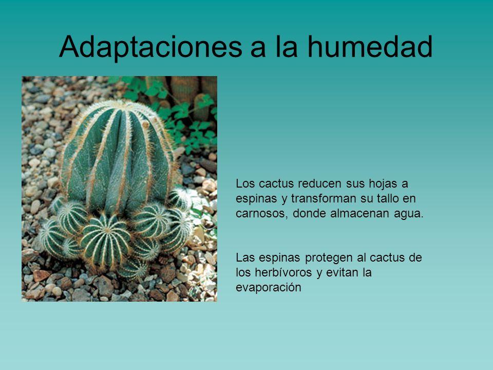 Adaptaciones de los seres vivos al medio ppt video - Aparato para la humedad ...
