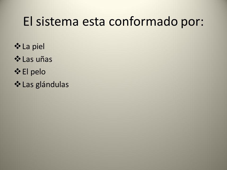 El sistema esta conformado por: