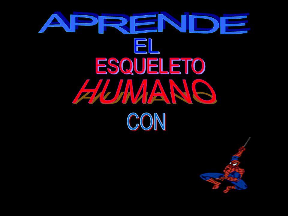 APRENDE EL ESQUELETO HUMANO CON