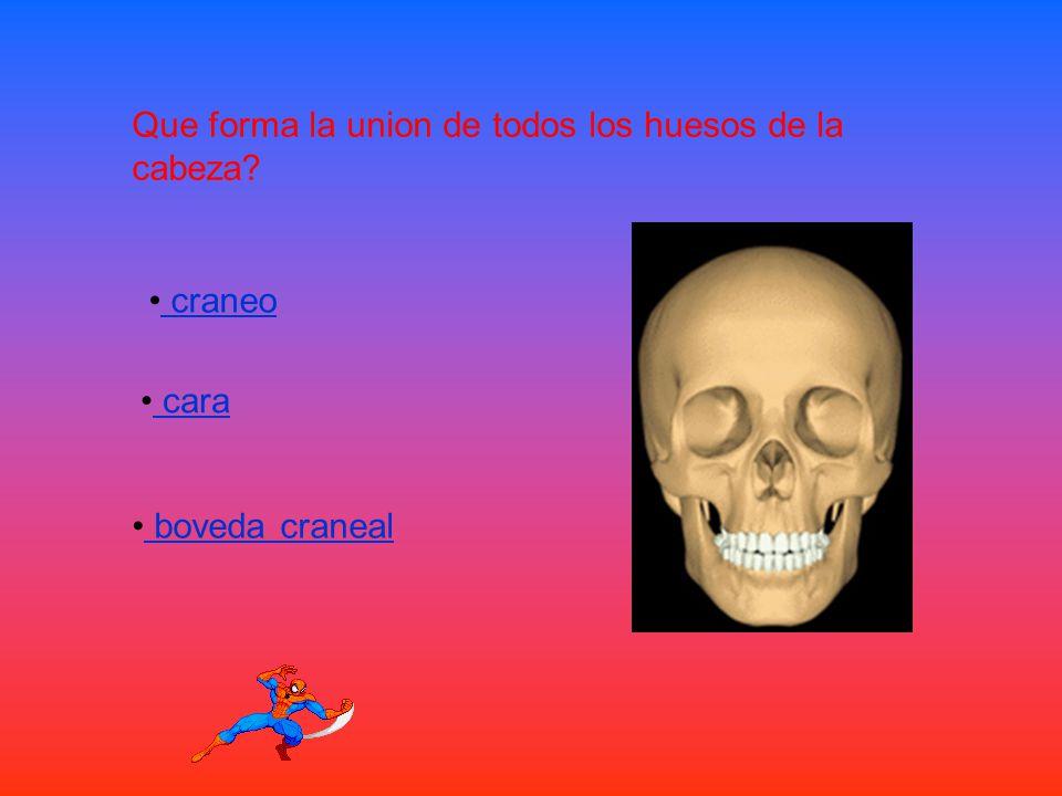 Que forma la union de todos los huesos de la cabeza
