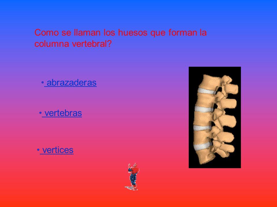 Como se llaman los huesos que forman la columna vertebral