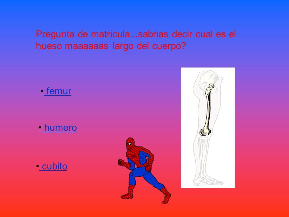 Pregunta de matricula...sabrias decir cual es el hueso maaaaaas largo del cuerpo