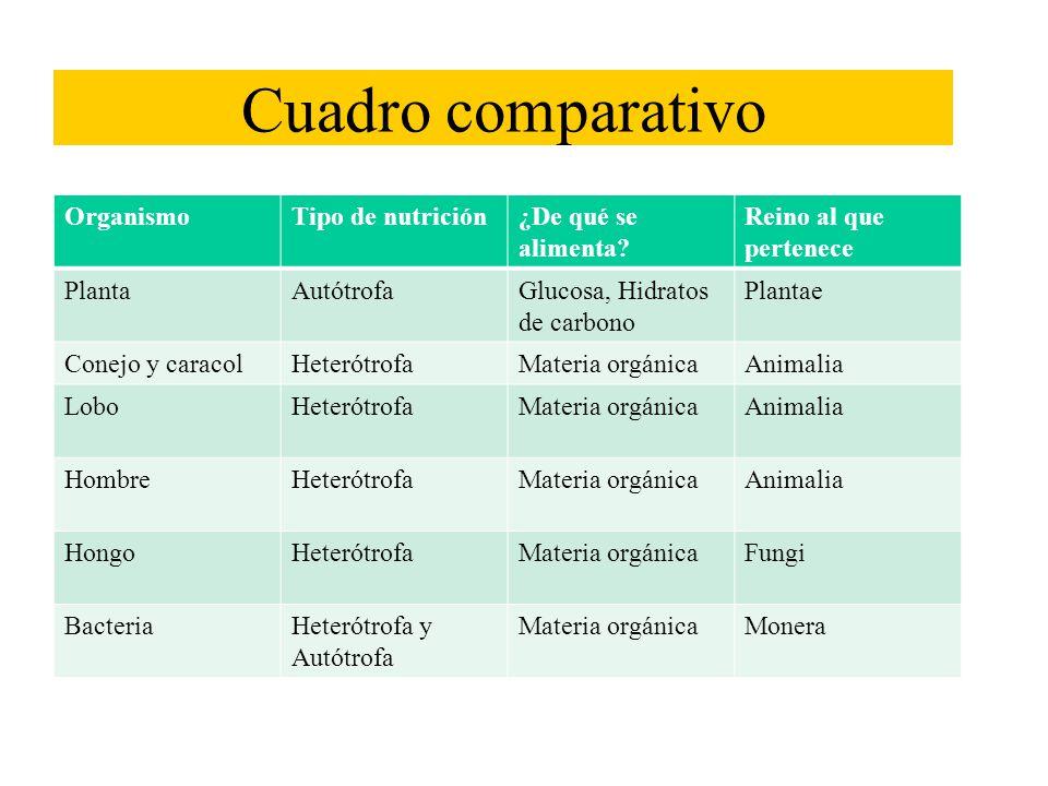 Clasificacion de los hidratos carbono yahoo dating 3