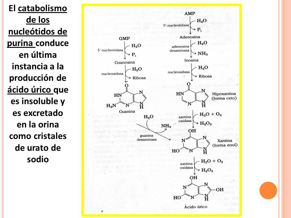 que pastillas debo tomar para el acido urico las espinacas producen acido urico que alimentos consumir para eliminar el acido urico
