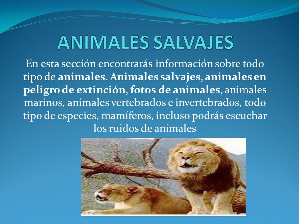 Animales domesticos son los animales que el ser humano a for Informacion sobre los arquitectos
