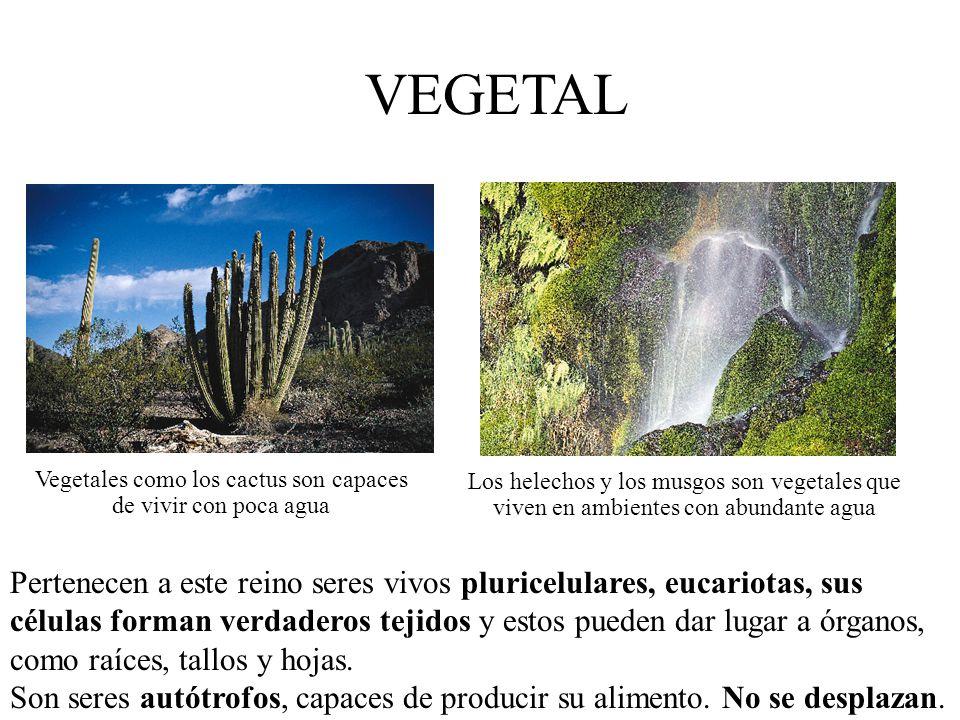 Vegetales como los cactus son capaces de vivir con poca agua
