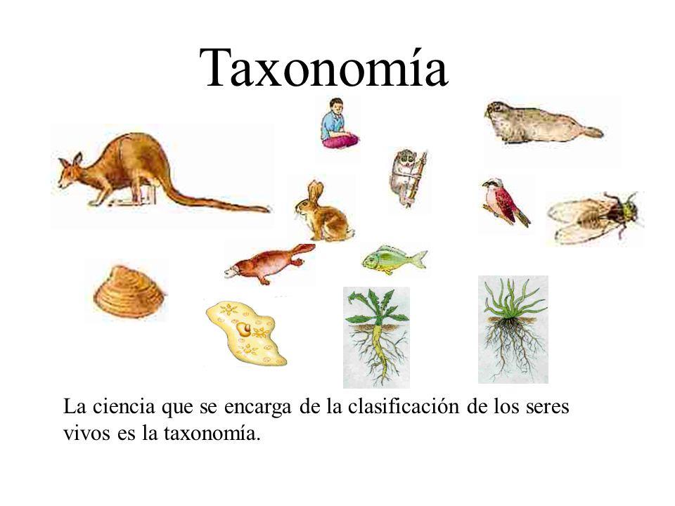 Taxonomía La ciencia que se encarga de la clasificación de los seres vivos es la taxonomía.