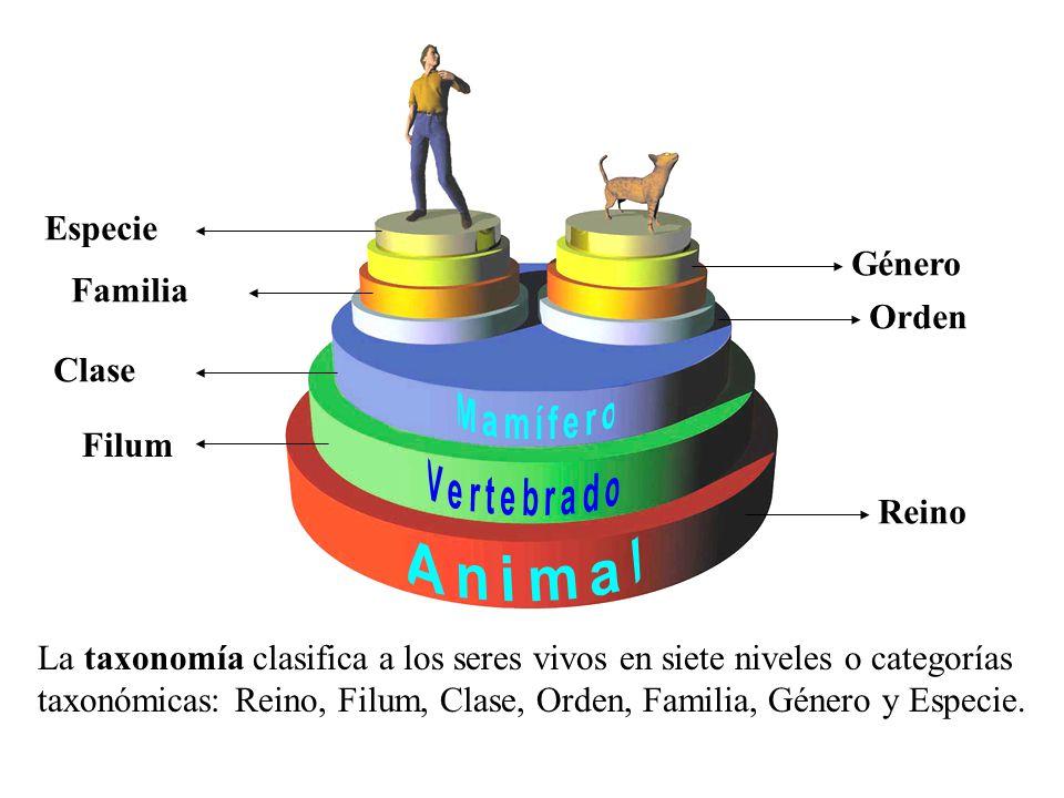 Especie Género Familia Orden Clase Filum Reino Animal