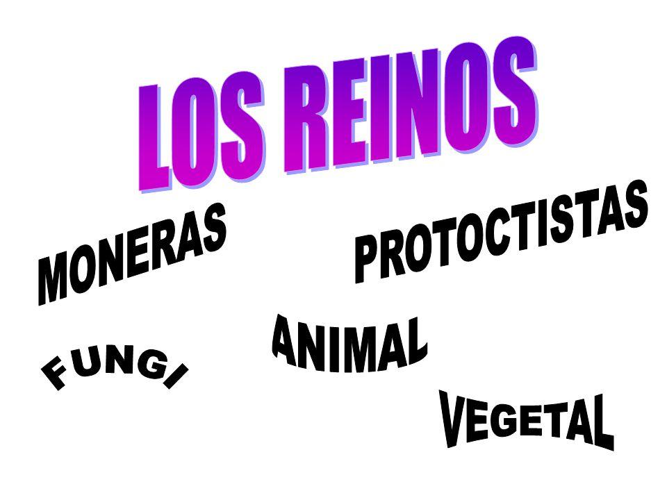 LOS REINOS PROTOCTISTAS MONERAS ANIMAL FUNGI VEGETAL