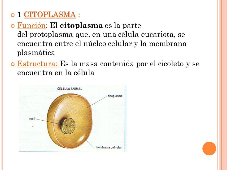 1 CITOPLASMA :