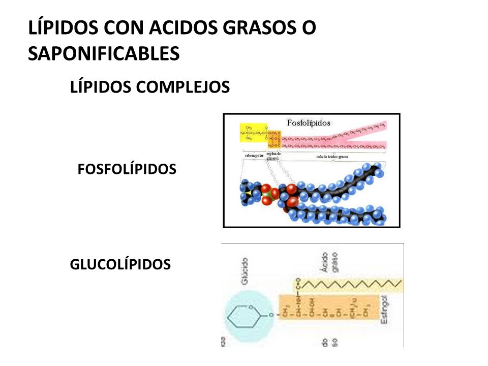 terpenos y esteroides wikipedia