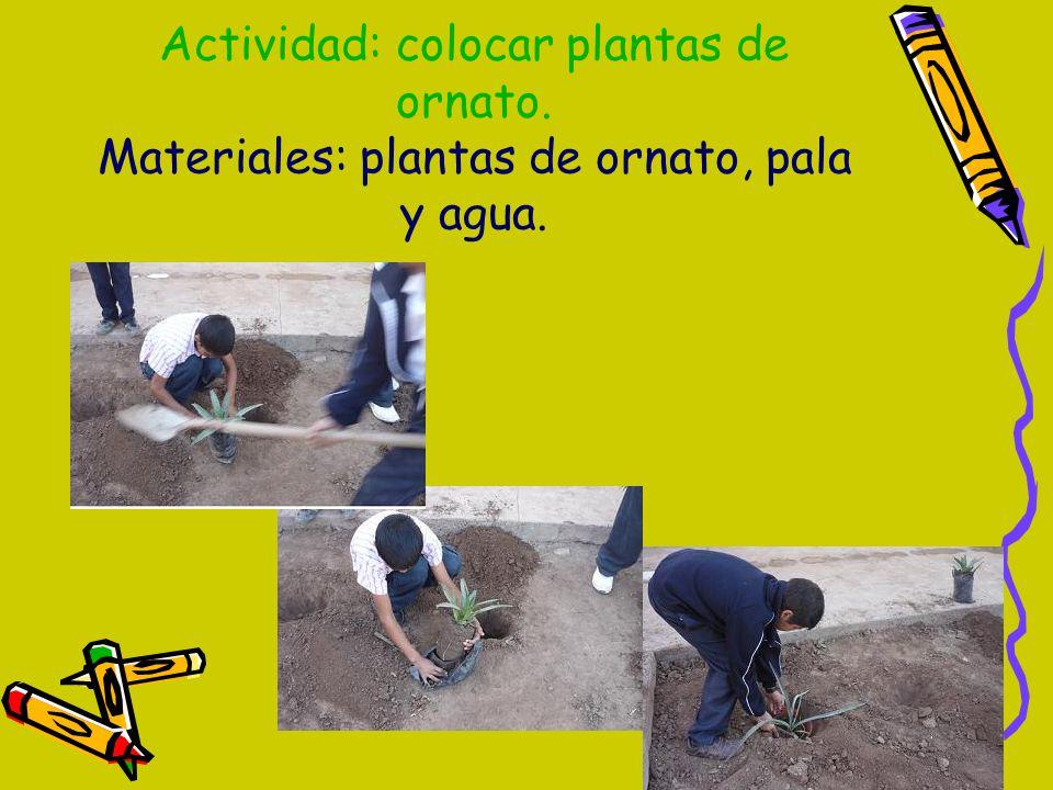 Embellecer nuestro entorno escolar ppt descargar for 10 plantas de ornato