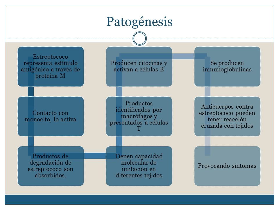 Patogénesis Estreptococo representa estímulo antigénico a través de proteína M. Contacto con monocito, lo activa.