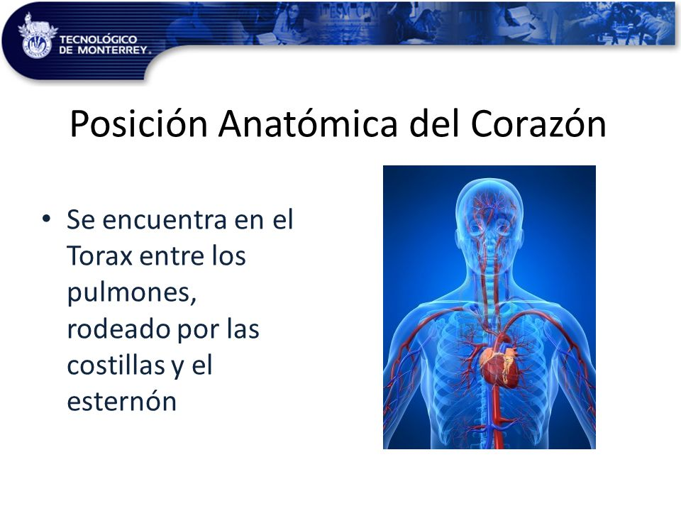 Increíble Corazón Colorear Página Anatomía Bosquejo - Ideas Para ...