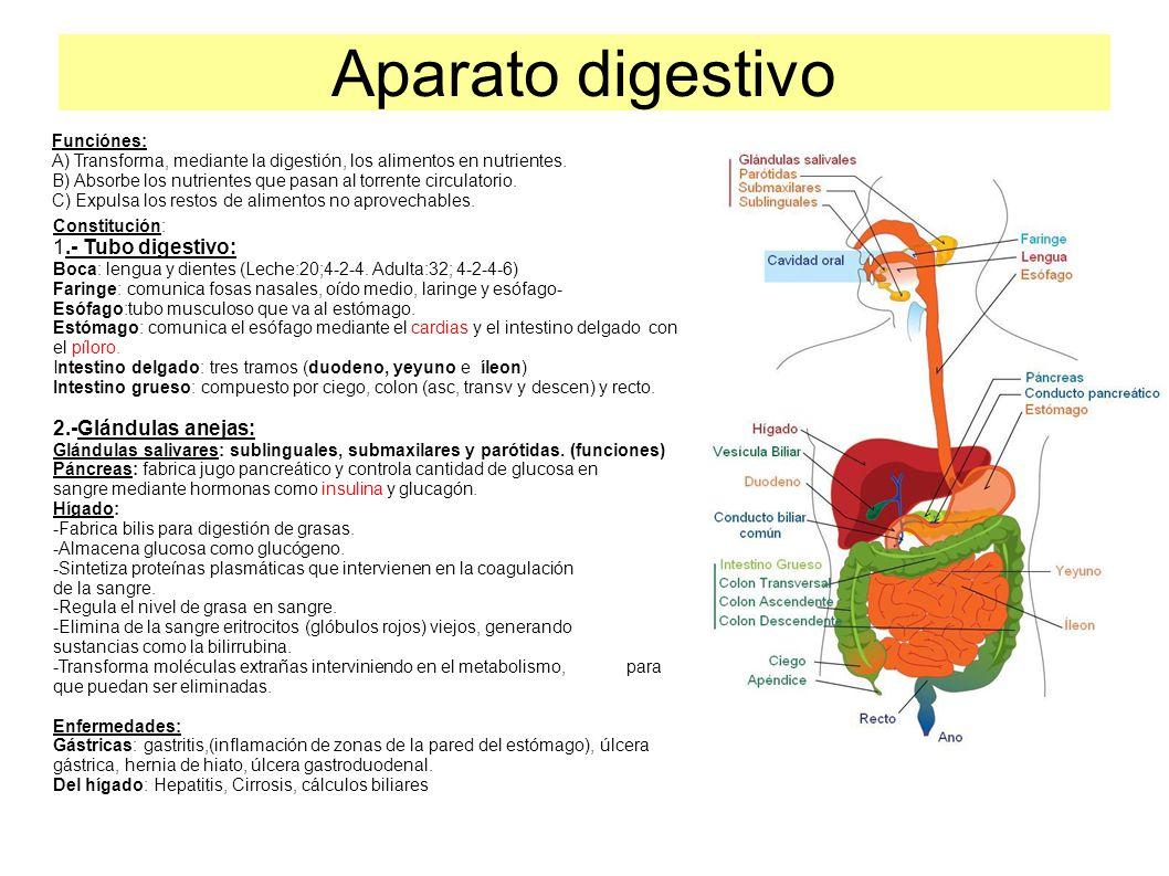 Aparato digestivo 1 tubo digestivo 2 gl ndulas anejas funci nes ppt descargar - Alimentos prohibidos para la hernia de hiato ...