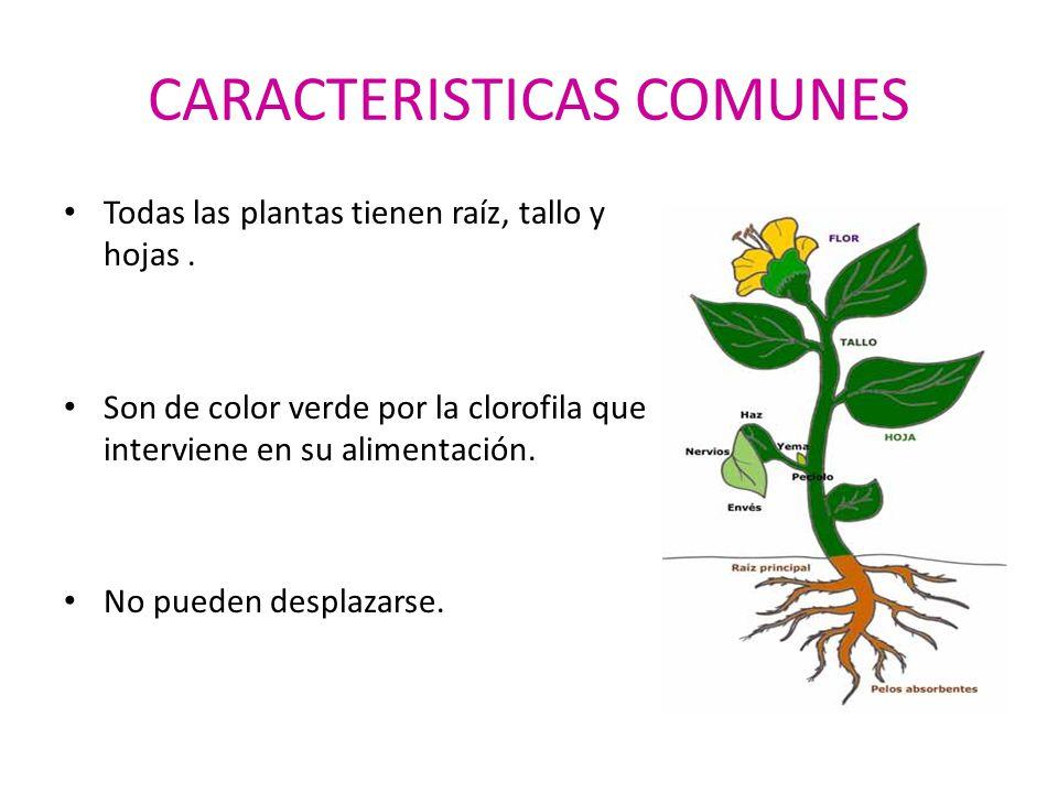 Las partes de las plantas ppt video online descargar for Todas las plantas son ornamentales