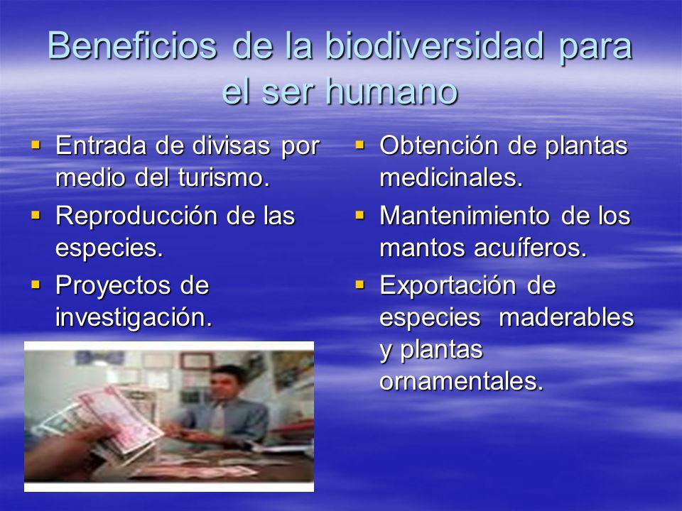 La biodiversidad de costa rica ppt descargar for Proyecto de investigacion de plantas ornamentales