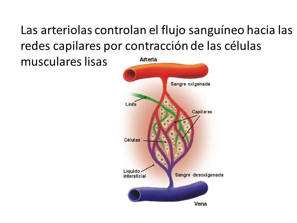 Vistoso Arteriolas Friso - Anatomía de Las Imágenesdel Cuerpo Humano ...