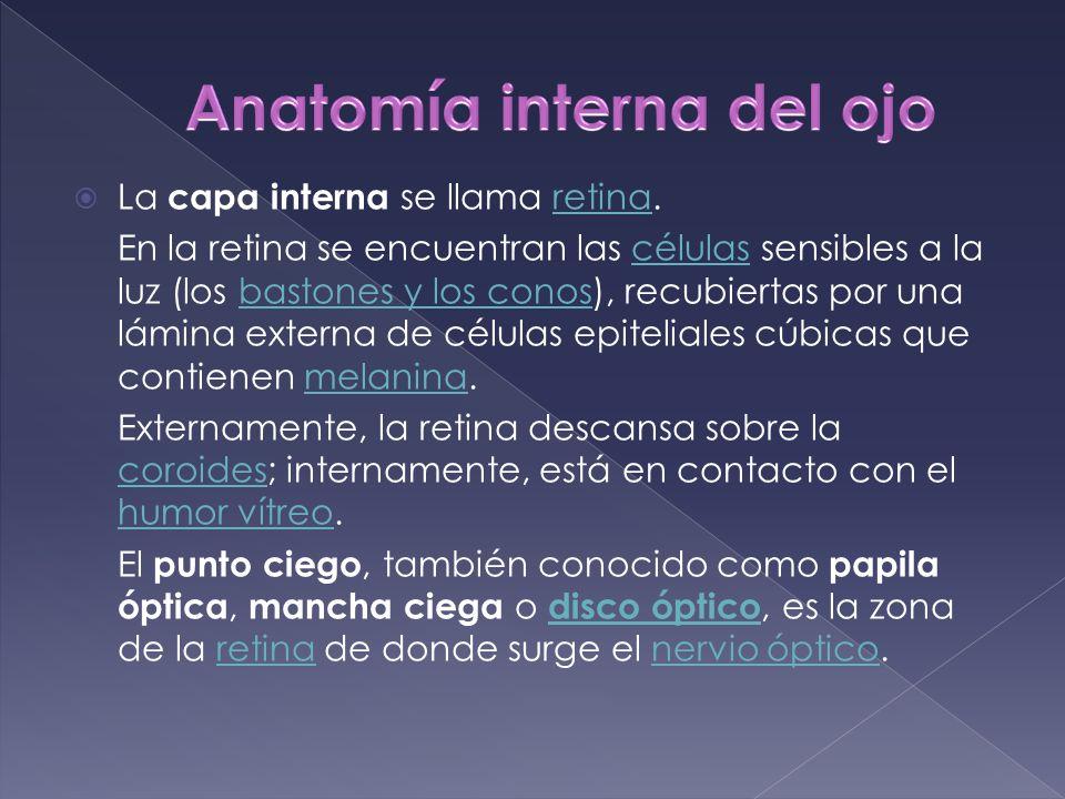 Lujoso Anatomía Interna Del Ojo Regalo - Imágenes de Anatomía Humana ...