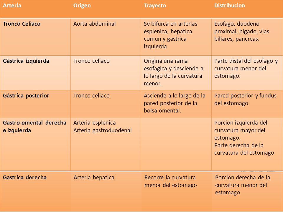 Bonito Arteria Celíaca Galería - Imágenes de Anatomía Humana ...