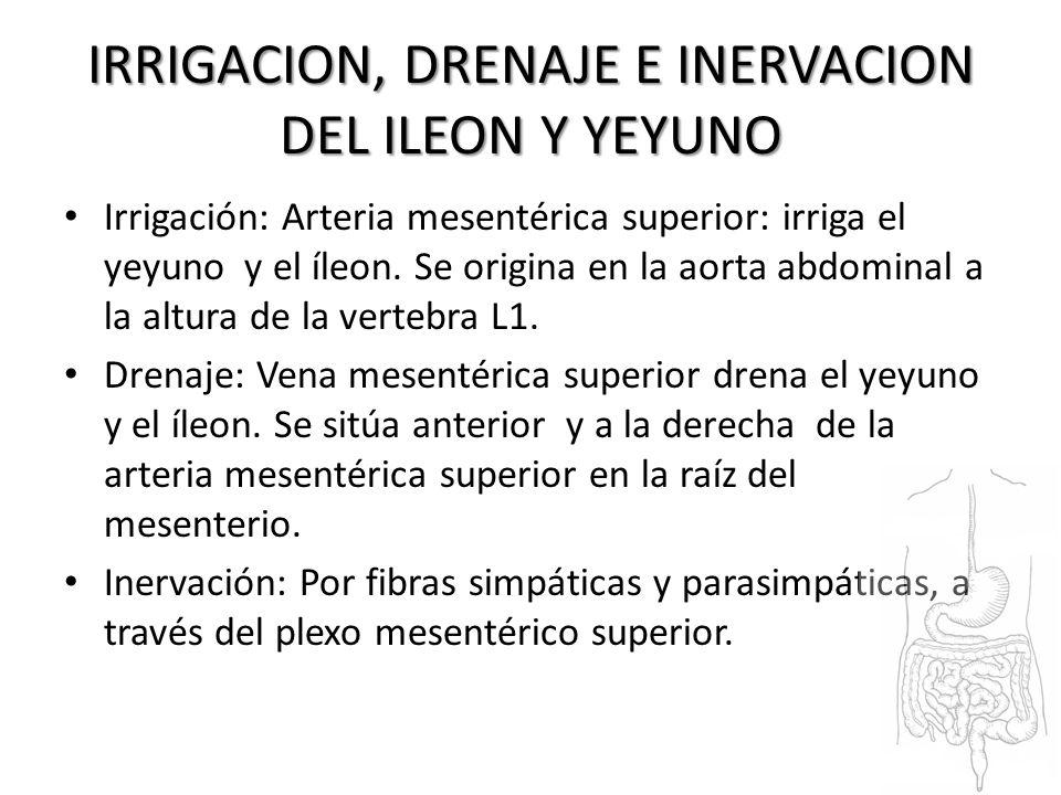 Irene Argilés Yorsuan Barrantes Nazareth Fernández - ppt video ...