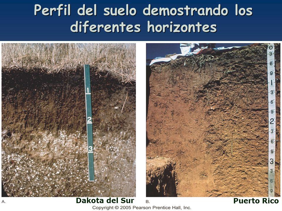 Geol 3025 cap 6 prof lizzette rodr guez ppt descargar for Perfil del suelo wikipedia