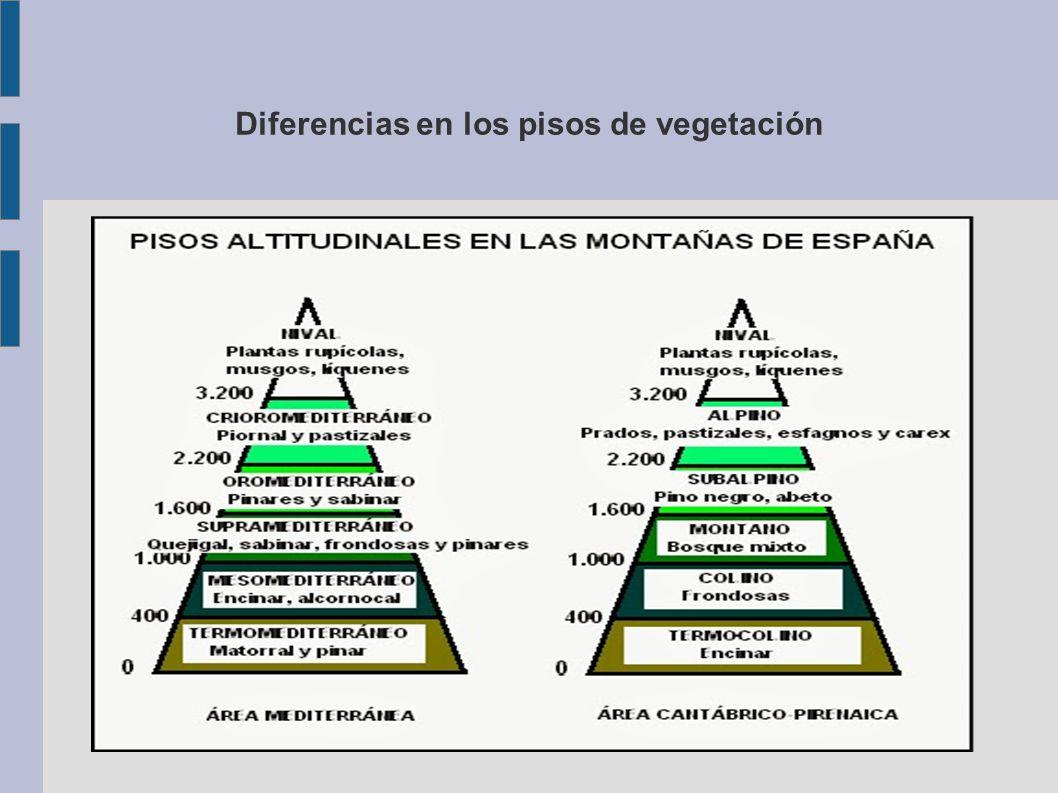 Caracter sticas regi n eurosiberiana ppt video online for Pisos de vegetacion canarias