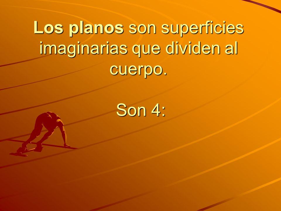 Los planos son superficies imaginarias que dividen al cuerpo. Son 4: